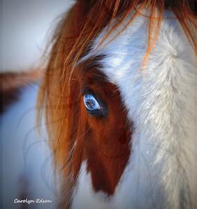 141    Ice blue eye.