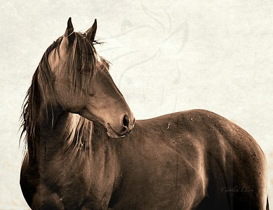 148 ~Stallion Bonfire