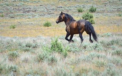 195 ~ Stallion Wicasa