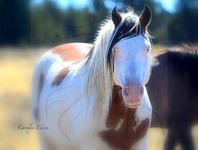 Stallion Shaman