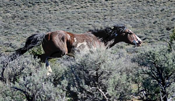 Stallion on the run.