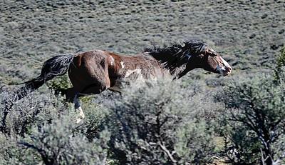 151 ~ Stallion on the run.