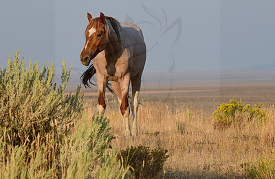 186 ~ The gorgeous red roan stallion.