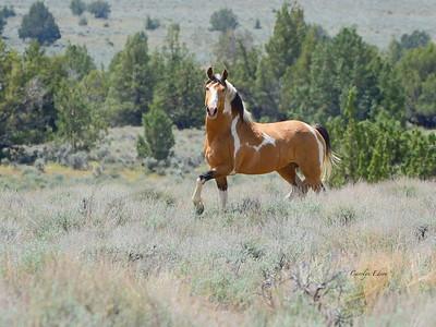 194 ~ Navajo ~ wild stallion