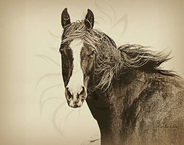 Sable in sepia.