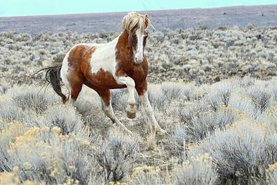 188 Stallion Cowboy