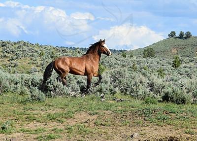 "193 ~ Solomon ""WILD""stallion"
