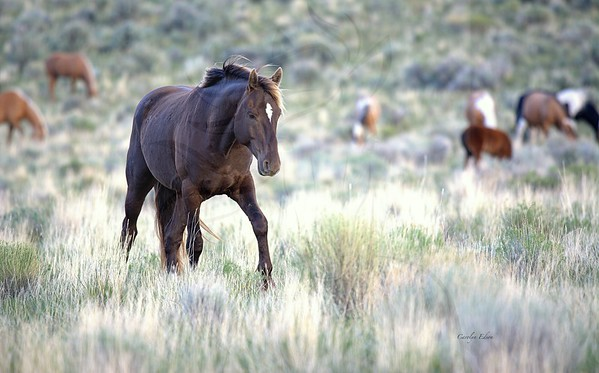 187 Stallion Marquee