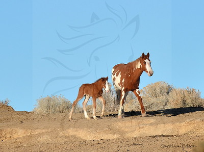 20  Mare and foal.