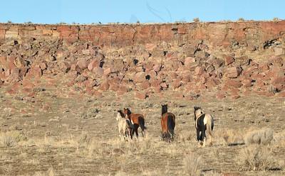 21  Band of Mustangs below the rimrock.