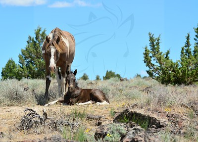61  Mare Chenoa and her beautiful foal.