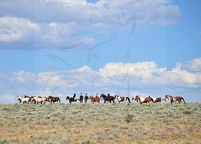 53   Two bands of Wild horses. Taken from the back of a Mustang.