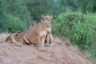 gazing pride