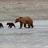The Great Land - Alaska : From bears in Katmai National Park to the greatness of Denali National Park, Alaska has it all.