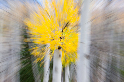 An on-camera motion zoom at slow shutter speed produces a color burst of fall aspens