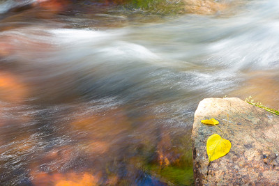slow shutter speed shows motion of water near fallen leaves