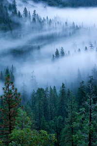 moonlight actually lights this image, dawn, yosemite valley fog begins to form from the falls, fresh moisture from a heavy overnight rain.