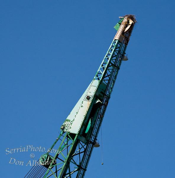 "The ""Crane"" an exclusive avian condo complex.<br /> <br /> 20090510-IMG_0786"