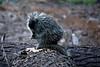 Porcupine, Devils Postpile National Monument<br /> <br /> 20081017-IMG_4904