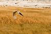 Owl, mono lake <br /> <br /> 20081015-IMG_4745