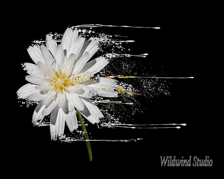 Wild White