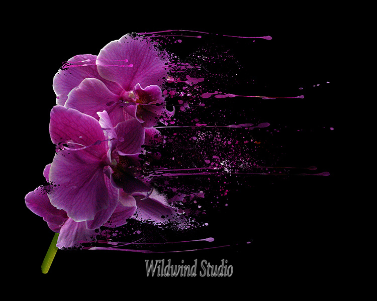 Purple Phalenopsis
