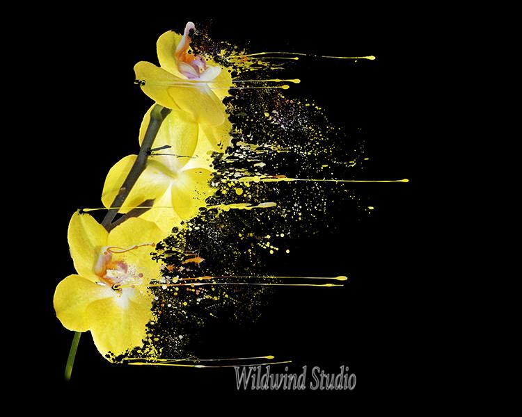 Yellow Phalenopsis
