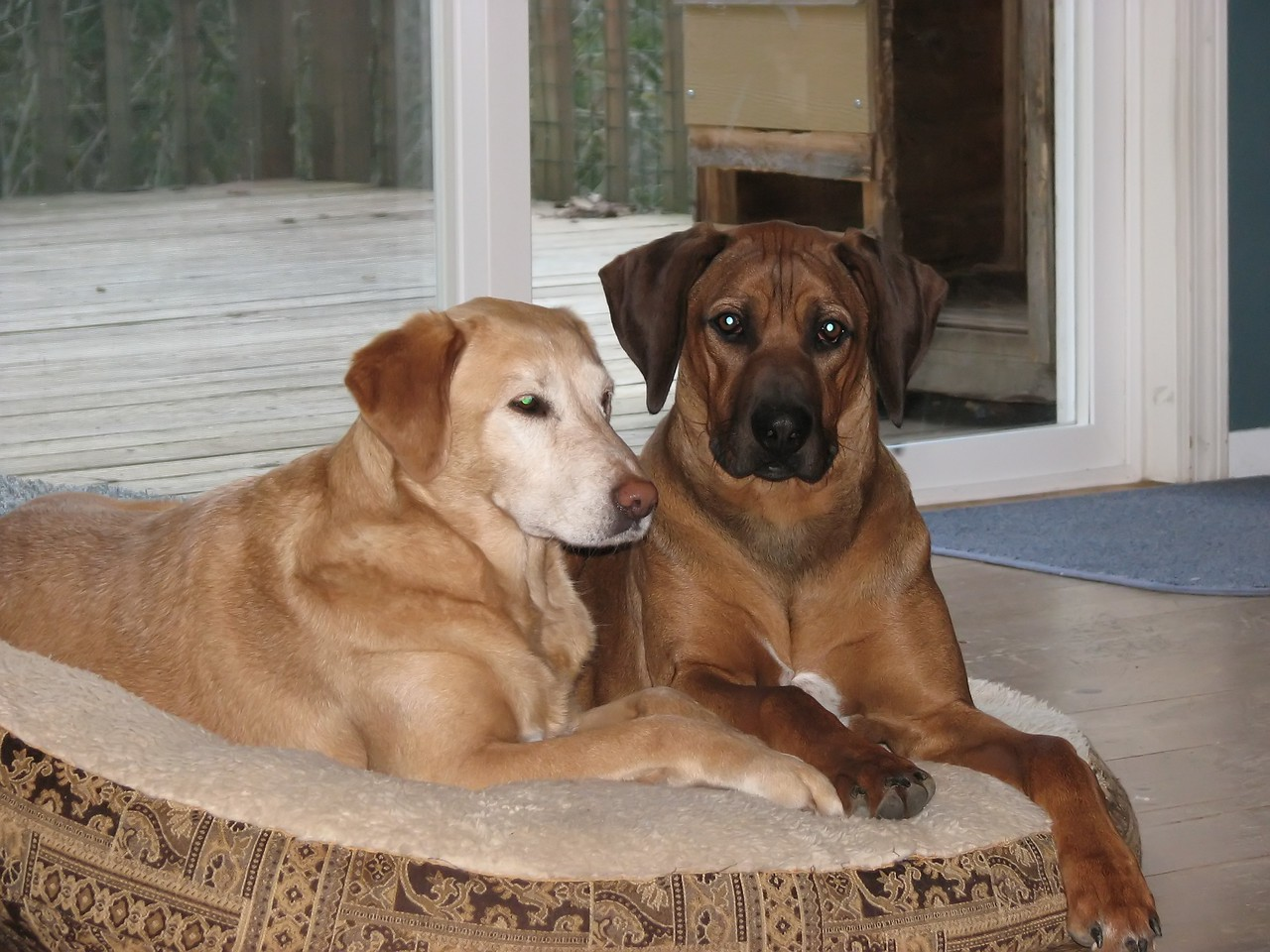 Lacy and Wiley . . . he still needs to learn that he has his own bed