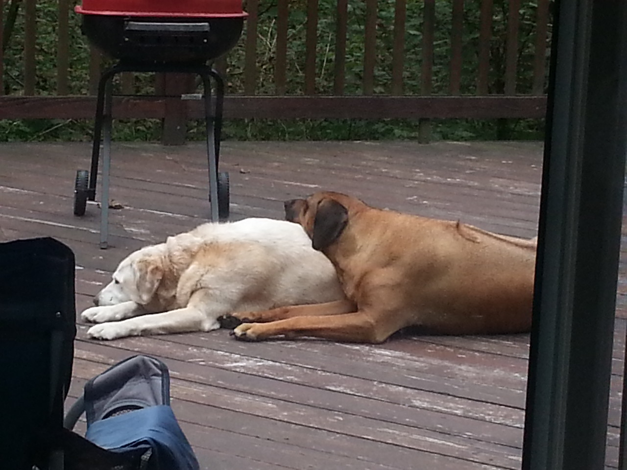 Lacy and Wiley at H1 Sept 2014 - Thanks Deb =)
