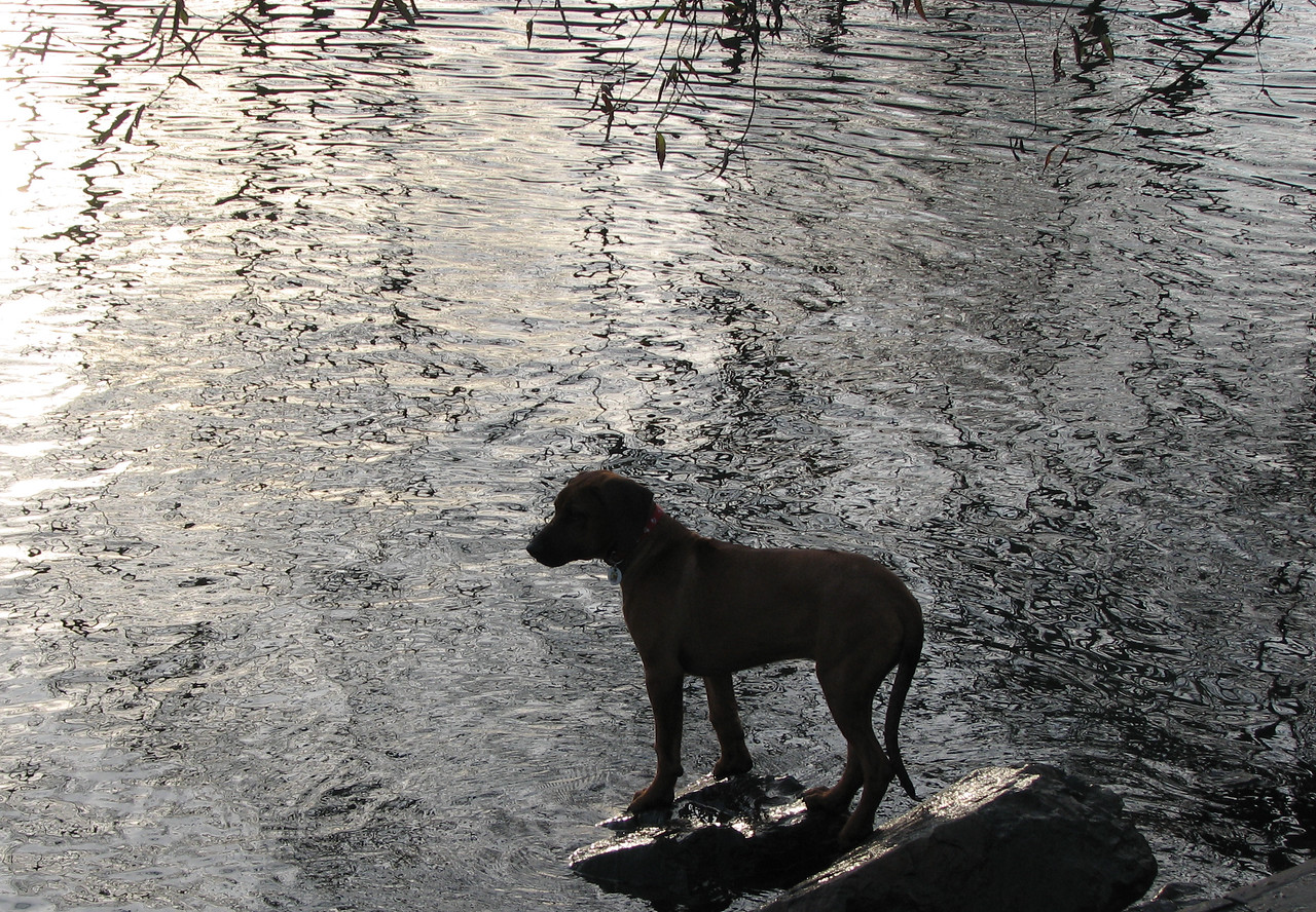 Young Wiley watching others swim