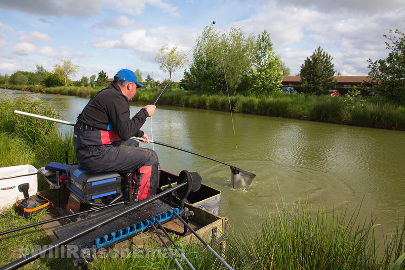 Will Raison nets a hard fighting barbel in the nearside margin beside the pond grass.