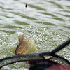 An F1 rolls into the landing net