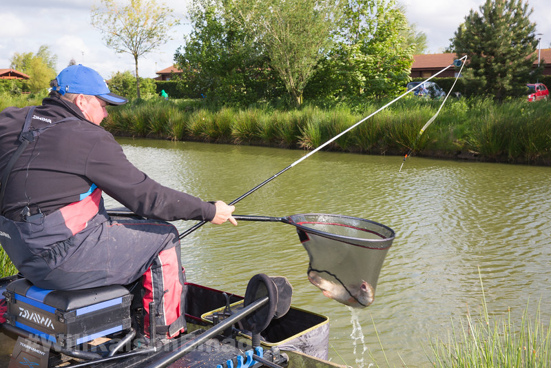 Will Raison nets a hard fighting barbel in the nearside margin beside the pond grass.