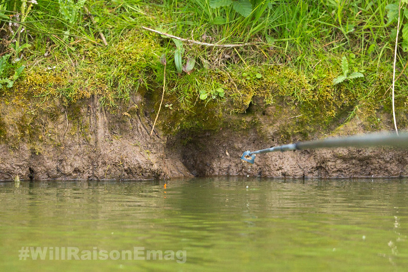 Loaded pole cup on a silver painted top kit deposits dampened pellets into far bank swim.