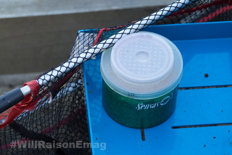 Small Sensas bait tub used for tougher older maggots.