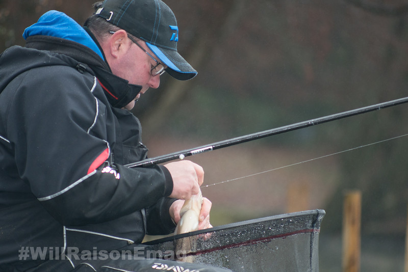 Unhooking a pole and worm caught bream