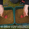 two handfuls of dead red maggots placed on top of two groundbait mixes in bowls
