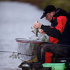 Removing a bream from the landing net. Will Raison fishes a small cage feeder with dead maggots and fishmeal for bream. © 2012 Brian Gay