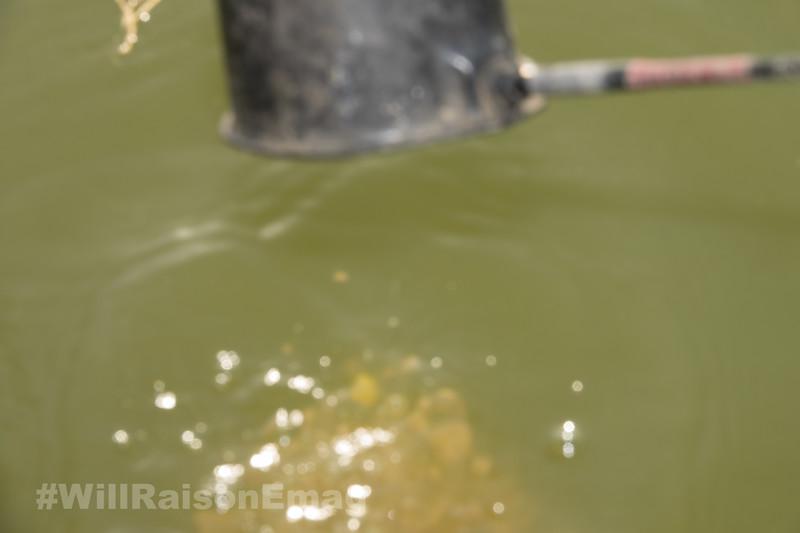 Feeding The Swim To Attract Fish 3.