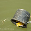 Feeding The Swim To Attract Fish 2.