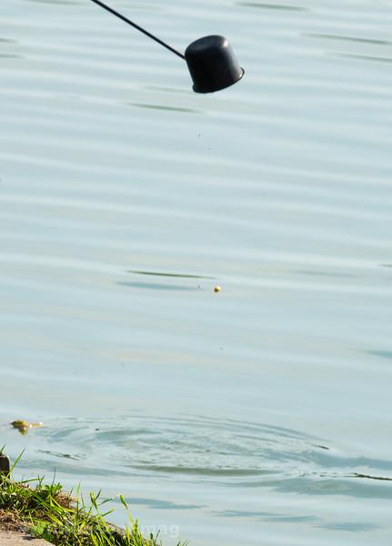 Fish In The Swim? Feed Meat & Corn.