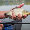Holding a hand sized F1 on Middle Lake.