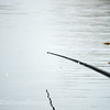 Long pole tip and black dotted float in the swim.