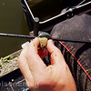 Pop the baited hook into the tall pole cup.