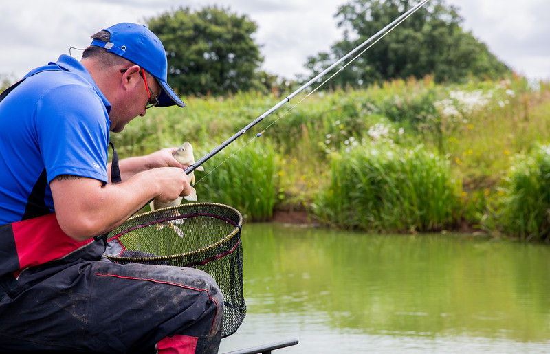 Placing an F1 carp in the net.
