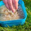 Cover  the dry 2.3 mm Westwood Lakes Coarse Pellets pellets with water so there is about a cm of water above the pellets. They take about 40 minutes to absorb the water.