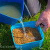 Pouring lake water onto the dry 2.3 mm Westwood Lakes Coarse Pellets pellets. They take about 40 minutes to absorb the water.