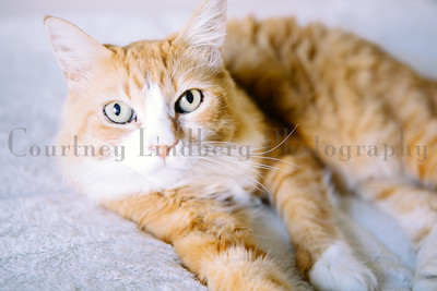 (C)CourtneyLindbergPhotography_060215_0001