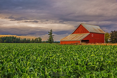 """Down on the Farm,"" Clouds at sunset over a Red Barn, Oregon"