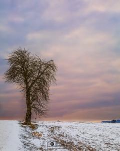 """Winter Solitude,"" Willamette Valley Winter Sunset, Oregon"